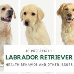 HEALTH PROBLEM FOR LABRADOR RETRIEVER