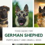 German shepherd food giude