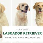 Labrador retriever health