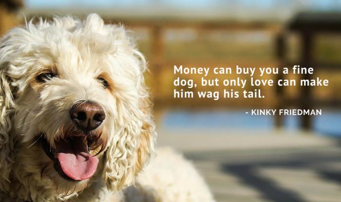 Fulfy dog